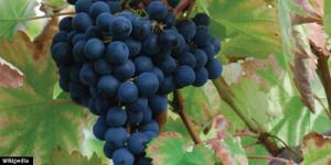 Vinos de Alicante - Quiero Delicatessen Villena