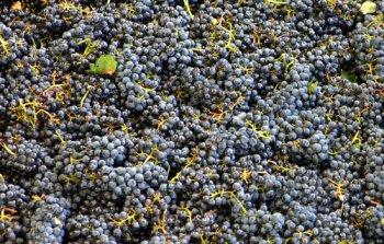 Champagne Cattier - Quiero Delicatessen Villena - Alicante - España