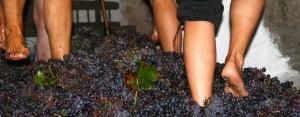 Ruta del Vino de Alicante - Quiero Delicatessen Villena