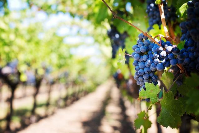 Vinos seleccion Cesar Muñoz Quiero Delicatessen Villena Alicante