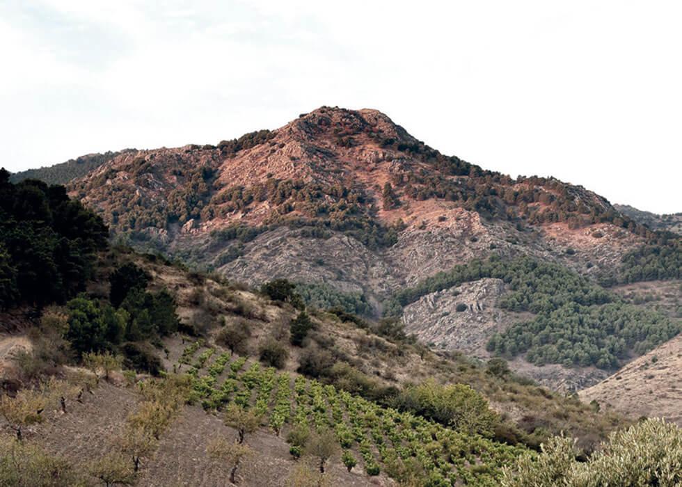Frontonio - Bodega - Bodegas - Quiero Delicatessen - Villena - Alicante