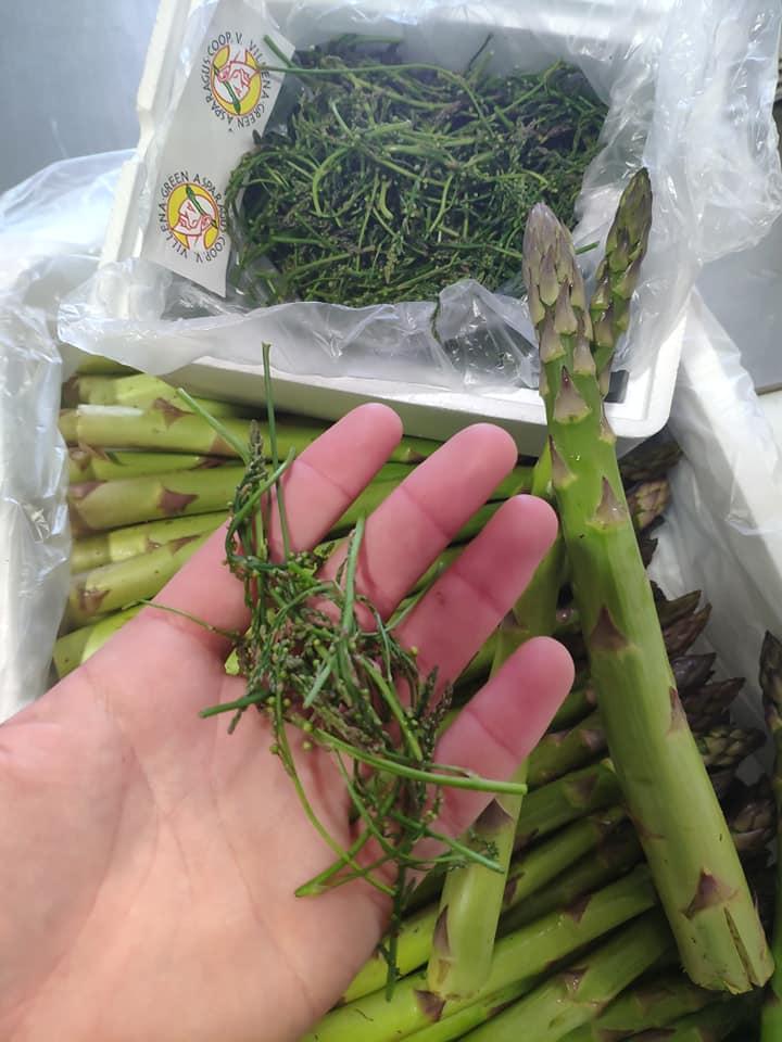 Esparrago de Villena - Green Asparagus Villena - Esparragos - Quiero Delicatessen