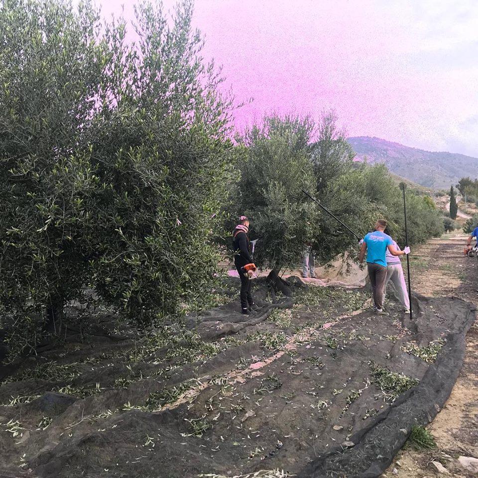 Señorios de Relleu - Aceite de oliva virgem - AOVE - Aceite - Quiero Delicatessen - Villena - Alicante