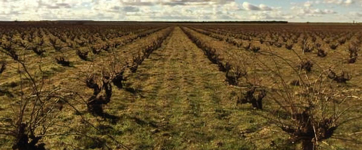 fotografía donde se ven los viñedos de los vinos maquina y tabla en quiero delicatessen