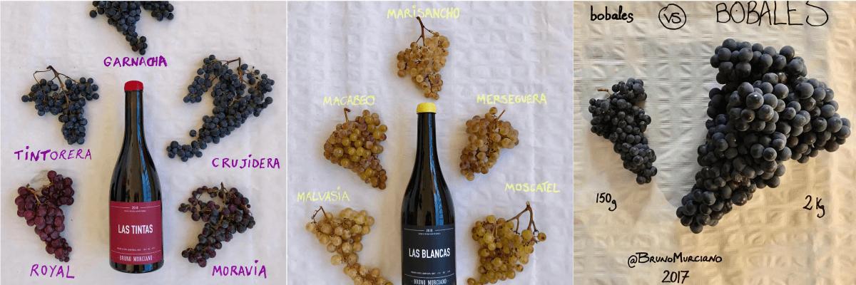 Una imagen de las uvas utilizadas para la elaboración de uno de sus vinos. Vinos Bruno y Jose Luis Murciano - Vinos en Quiero Delicatessen - Villena - Alicante - Vino - Vinos - Bobal